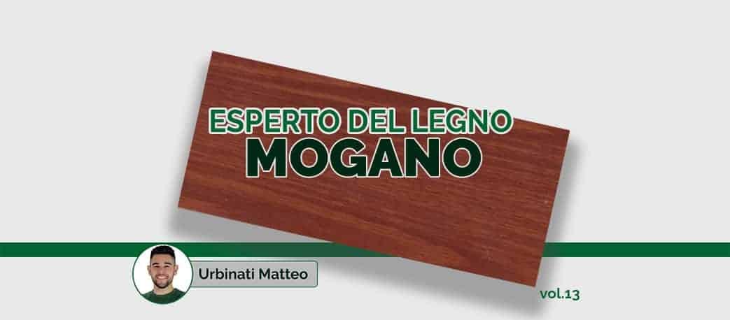 Esperto del legno di Mogano